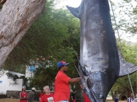 1222-lbs-blue-marlin-2