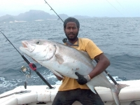 heldermitamberjack